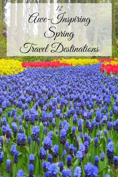 Spring is here! Well, in a month, anyway. But if you're like me, you're over winter and ready for some sunshine. So if you want to get a head start on your spring travel plans, today I bring you A Lad