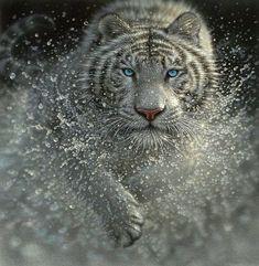 Amazing Creatures #BigCatFamily