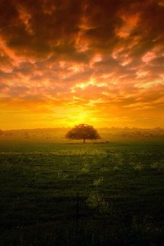 Growing up my father told me sometimes farmers left a tree out in the middle of their fields, so that when they tired of planting & the sun became to hot, they could sit a spell under those old trees rest a bit & sometimes eat their lunch