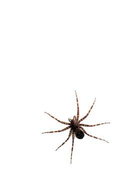 fishing spider (mary jo hoffman)