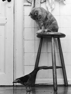 vintage 1930's photo/ cat photography in bw