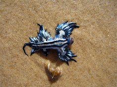 blueseaslug