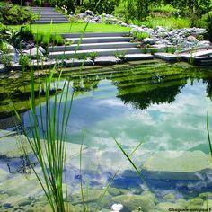 La piscine naturelle... Barbotons avec les grenouilles !