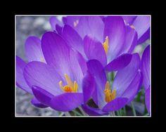 Spring is coming .... by MC-blue.deviantart.com on @deviantART
