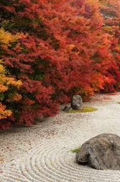"""Zen garden in autumn"" Kyoto, Japan"