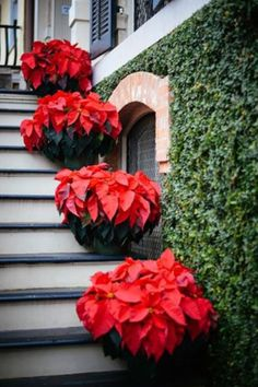 nice 51 Beautiful Christmas Decoration Ideas In Red Domination Christmas Open House, Southern Christmas, Christmas In The City, Christmas Porch, Green Christmas, Outdoor Christmas, Christmas Colors, Christmas Ideas, Natural Christmas