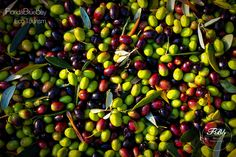 """The olive picking season begins on October! Wanna join us? Book your room now and join our """"Florida Blue Bay Eco Tourism"""" project!  Only at Florida Blue Bay Resort!"""