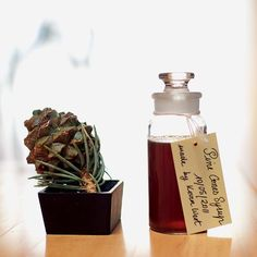Fresh, green pine cones make flavorful, seasonal syrup to drizzle on your favorite desserts or breakfast dishes.