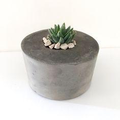 Concrete PLANTER WITH SUCCULENT Concrete Planters, Planter Pots, Soy Wax Candles, Succulents, Cartoons, Plants, Decor, Cartoon, Decoration