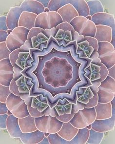 Another one for #succykaleidoscope Featuring Echeveria Perle Von Nurberg.  #succulent #succulents #echeveria #echeveriaperlevonnurnberg