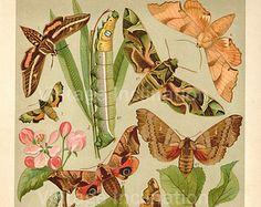 1890 illustrations birds - Google Search Vintage Drawing, Birds, Illustrations, Google Search, Drawings, Animals, Sketches, Animais, Animales