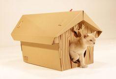 chat heureux une petite maison splendide