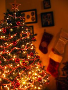 christmas trees <3