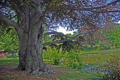 Tree (c) photo by sandra goroff sgma@aol.com