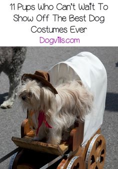 Looking for the best dog costume ever? These dogs can't wait to show off their hilarious and epic looks for Halloween or just for fun! Best Dog Costumes, Dog Halloween Costumes, Pet Costumes, Link Halloween, Halloween 2017, Halloween Ideas, Costume Ideas, Cute Little Dogs, Little Cowboy