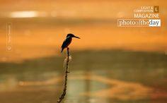 Into The Orange Sea, by Tamal Debnath