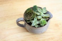 Succulents in a Cup...Top 30 Glorious DIY Home Projects That You've Never Heard Of