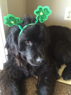My first St Paddy's Day