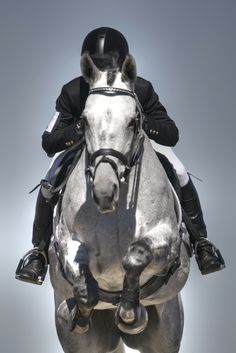 Show Jumper Awesome pic!