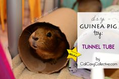 how to make guinea pig tunnel toy
