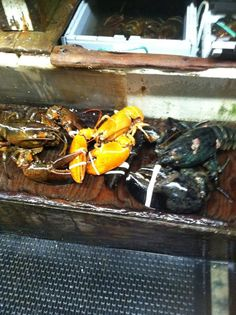 Lobsters, like people, come in all colors.