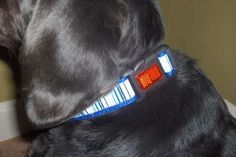 How to update plain dog collars....you can find plain collars at the dollar store and add bling or fabric..easy