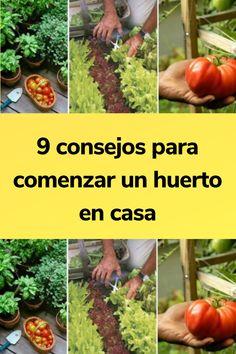 9 consejos para comenzar un huerto en casa Green Ideas, Plantar, Sprouts, Origami, Vegetables, Crafts, Gardens, About Plants, Growing Vegetables