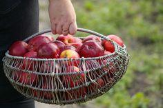 Věděli jste například, že brambory uložené na dřevěném uhlí mají po celou zimu výbornou chuť a jen tak nevyklíčí? Máme pro vás několik dobrých rad, jak mít i v zimě ovoce a zeleninu stále jako čerstvé.