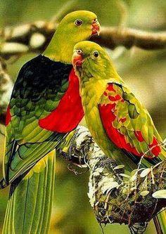 Colorful parrot couple. - Anna Meregne - Google+