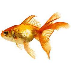 Watercolor Painting AND Fish - Saferbrowser Yahoo Image Search Results