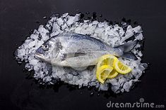 Gilt-head bream fresh on ice bed with lemon for decoration, on a black background. The gilt-head sea bream Sparus aurata is a fish of the bream family Sparidae found in the Mediterranean Sea and the eastern coastal regions of the North Atlantic Ocean Ice Stock, Image Of Fish, Mediterranean Sea, Atlantic Ocean, Black Backgrounds, Coastal, Lemon, Fresh, Stock Photos