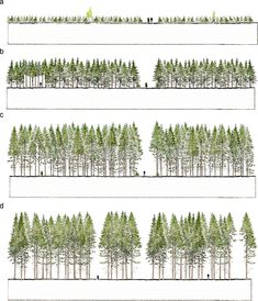 Ander Busse_Urban Forestry & Urban Greening - Some visual aspects of planting design and silviculture across contemporary forest management paradigms – Perspectives for urban afforestation