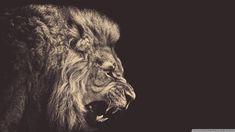 lion face tattoo - Buscar con Google