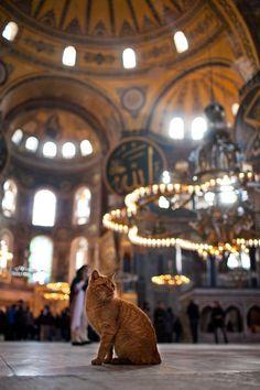 aya sofia ayasofya hagia santa basilica istanbul i… Mecca Wallpaper, Islamic Wallpaper, Hagia Sophia, Muslim Images, Mosque Architecture, Cat Aesthetic, Turkish Art, Istanbul Turkey, Beautiful Cats