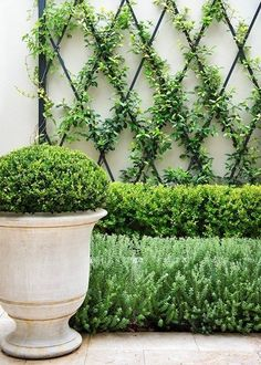 Climbing vines go vertical and geometric for a dramatic focal point outdoor. Click this pin for more backyard ideas!