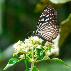 sinharaja rain forest animals and birds - Google Search