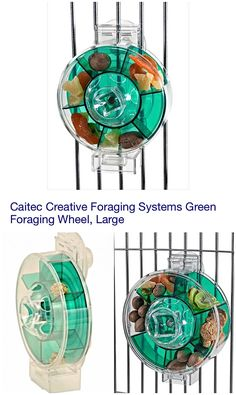 Acrylic Mounted Foraging Wheel in Green | Creative Foraging Systems, Caitec