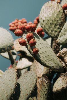 28 Ideas For Succulent Photography Nature Plants Cactus Photography, Modern Photography, Desert Photography, Photography Jobs, Photography Backdrops, Nature Photography Flowers, Photography Hashtags, Photography Classes, Family Photography