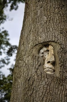 tree people at groombridge place, kent, UK by stu mayhew