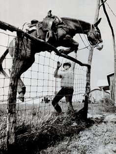 "From ""Small-Town America: An Endangered Species?"", National Geographic, February (Photo by John H. Pretty Horses, Beautiful Horses, Draft Mule, Mules Animal, Burritos, Small Town America, Rare Animals, Horse Photos, Show Jumping"