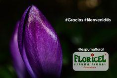 Espuma floral (@espumafloral) | Twitter.  Gracias a todos los  #diseñadoresflorales presentes en nuestros tableros.Sólo la #espumafloral #FLORICEL brinda estabilidad y sujeción, además de perfecta provisión de agua a las flores y una excelente duración del diseño.