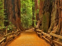 Enter a Peaceful World of Wonder. Giant Redwoods line this path in what is technically not a Nat'l Park, but a Nat'l Monument. Muir Woods in CA is home to the Ancient Redwood Forest.- Worth the Trip! Forest Path, Redwood Forest, Forest Trail, Oh The Places You'll Go, Places To Travel, Places To Visit, Thing 1, Death Valley, Stairway