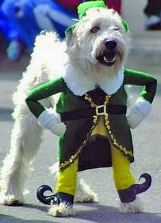 dog funny - Google Search