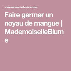 Faire germer un noyau de mangue | MademoiselleBlume