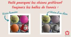 #LeSaviez-Vous ? Pourquoi mon #chien préfère les balles de #Tennis plutôt que ces autres #jouets ? Simplement parce que leur couleur est plus facilement repérable pour eux !