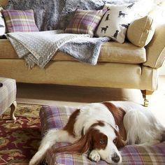 gosford grape tweed cushion dog bed by the stylish dog company | notonthehighstreet.com