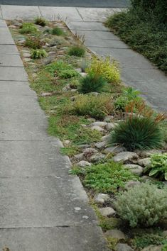driveway rock garden