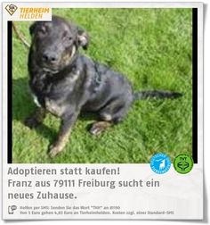 Welpe Franz sucht ebenso im Tierheim Freiburg ein Zuhause.  http://www.tierheimhelden.de/hund/tierheim-freiburg/bardino_mix/franz/9934-0/  Franz ist verspielt, neugierig und bereit, die Welt zu erkunden. Aufgrund seines Alters braucht er natürlich noch die nötige Erziehung.