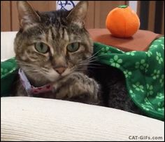 """Stretching Cat: """"Look at my claws, human"""". More Lazy Cat GIFs @ http://www.cat-gifs.com"""