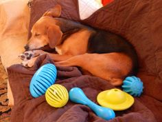 Sleepy Dogs, Dog Toys, Pup, Fans, Relax, Facebook, Dog Baby, Puppies, Puppys